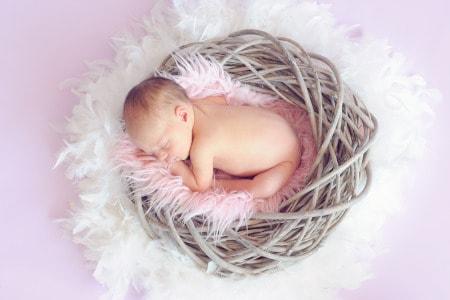 bébé dans le nid