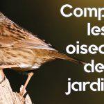 Comptez les oiseaux des jardins